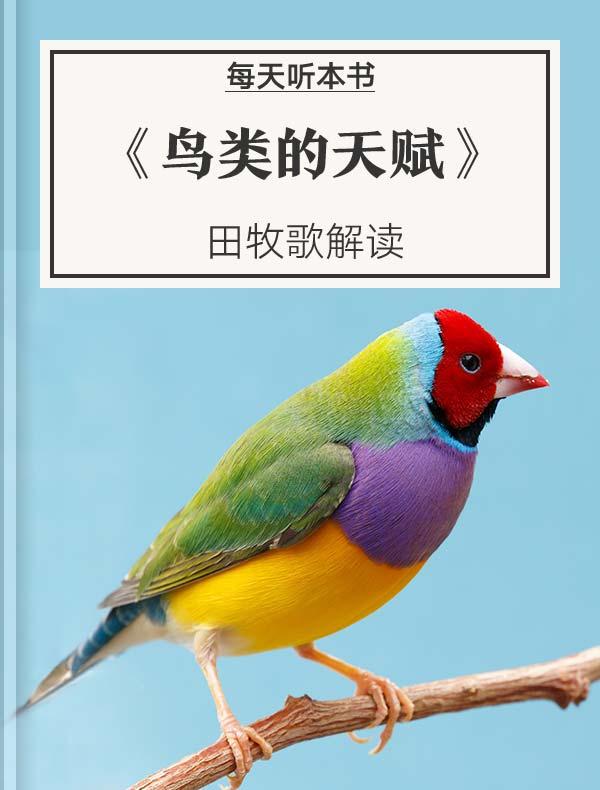 《鸟类的天赋》| 田牧歌解读