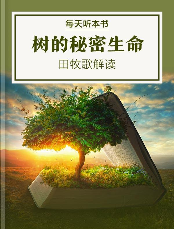 《树的秘密生命》| 田牧歌解读